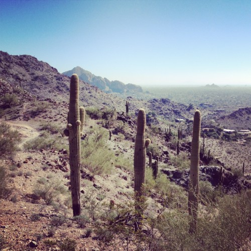 Quartz Ridge Trail (Camelback Mountain in back)